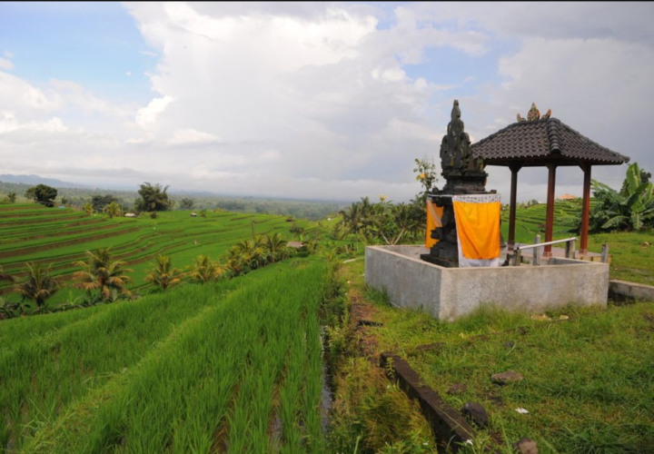 Traditional Subak Irrigation System in Bali